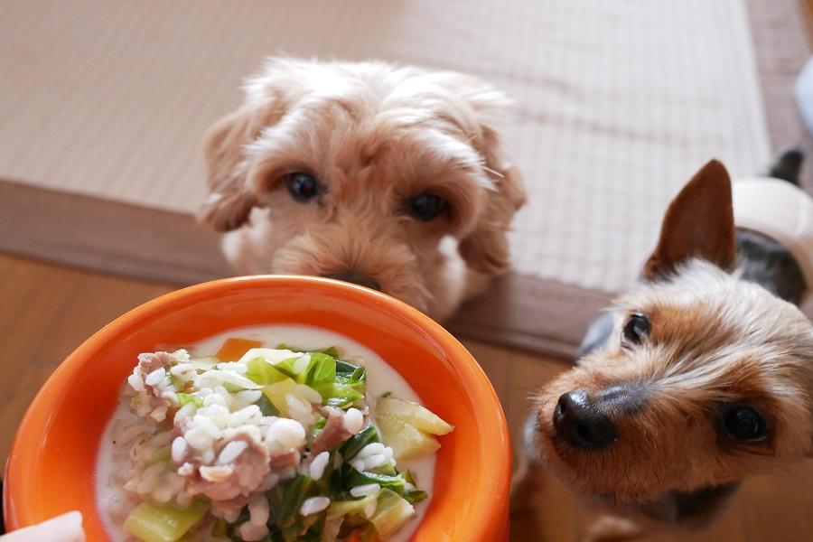 Comment bien nourrir son chien en fin de vie ?