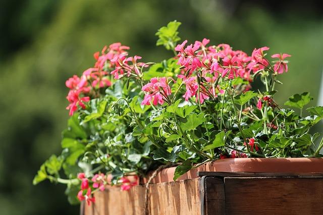 Le bac d'orangerie, la star des terrasses et jardins