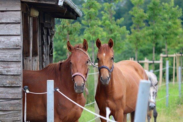 Choisir une pension que votre cheval aimera