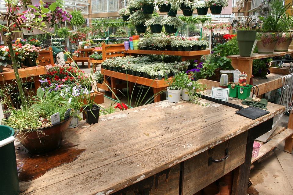 Les plantes d'intérieur : comment bien les choisir en jardinerie ?